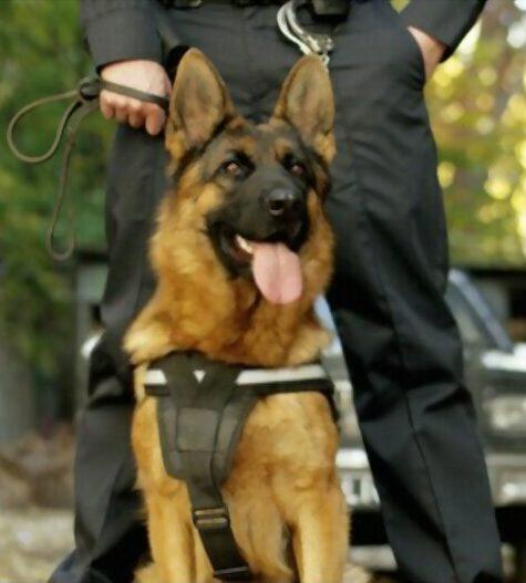 Dog Handling Service 2