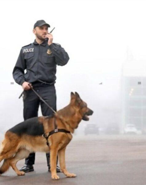 Dog Handling Service 3