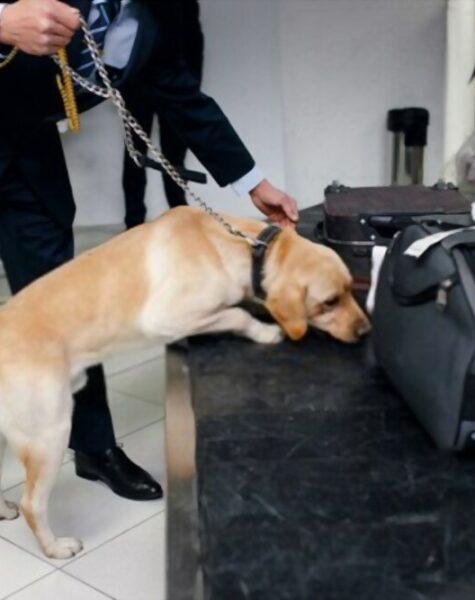 Dog Handling Service 4